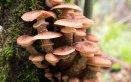sognare funghi significato