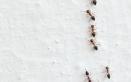 Arriva il caldo, arrivano le formiche