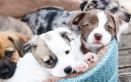 cagnolini cani cagnolina calore tempi cuccioli
