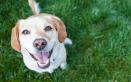 Ristoranti e SPA per cani e gatti