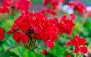 fiori estivi balcone, quali fiori piantare per l'estate
