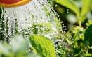 proteggere piante estate