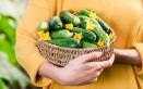 coltivare cetrioli vaso, coltivare cetrioli