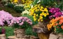 fiori autunnali, fiori da piantare a novembre