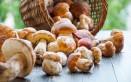funghi, porcini, pulizia