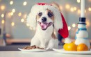 cane, panettone, Natale