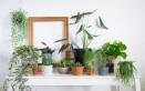 come curare piante interno, come curare piante appartamento, come coltivare piante interno