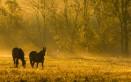 sognare cavalli, cosa significa sognare cavalli