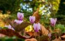 fiori autunnali nomi, fiori autunnali foto, fiori autunnali, fiori autunno