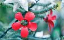 decorazioni natalizie materiali riciclo, decorazioni natalizie materiale riciclato, decorazioni natalizie idee