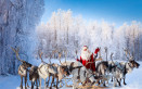 Renne di Babbo Natale