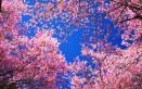 sfondi desktop primavera gratis, sfondi desktop primavera, immagini primavera