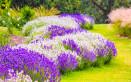 fiori estivi da giardino pieno sole, fiori estivi da giardino, fiori pieno sole