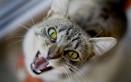 gatto arrabbiato motivi