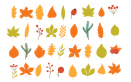memory fai da te foglie