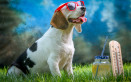 rinfrescare cane caldo