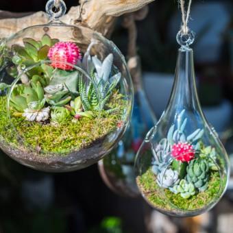 terrario piante fai da te, terrarium fai da te, giardini miniatura