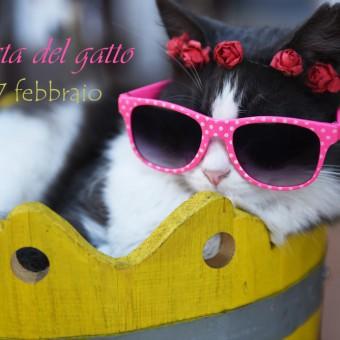 festa del gatto immagini, gatto immagini divertenti, giornata del gatto