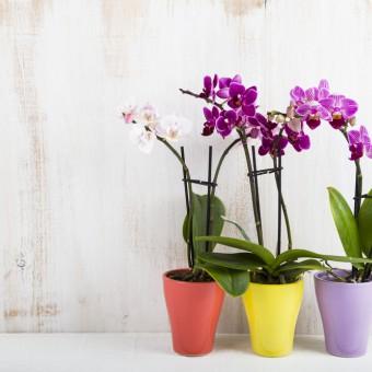 piante da interno fiori, piante interno fiori nomi, piante interno fiori foto