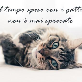 giornata gatto immagini frasi, giornata gatto immagini, giornata gatto frasi