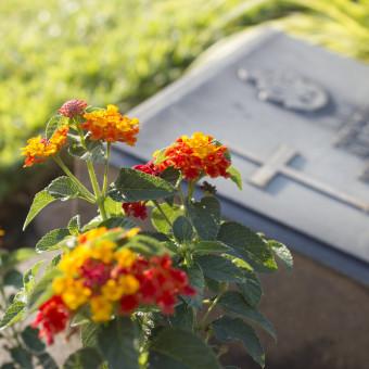 quali fiori coltivare cimitero, fiori cimitero