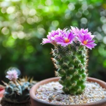 piante grasse nomi, piante grasse foto, piante succulente nomi