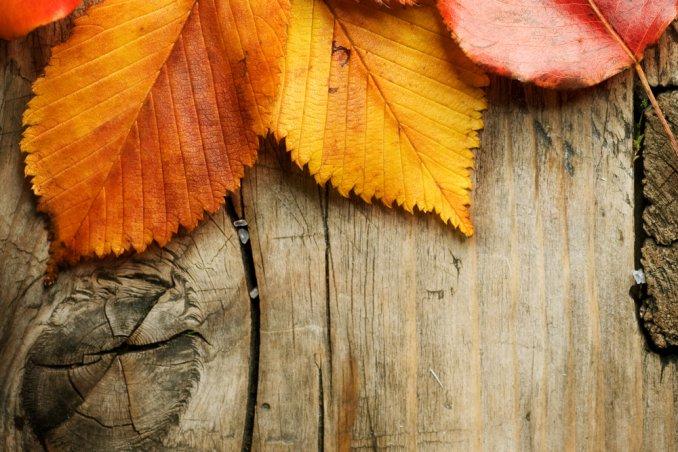 foglie autunno