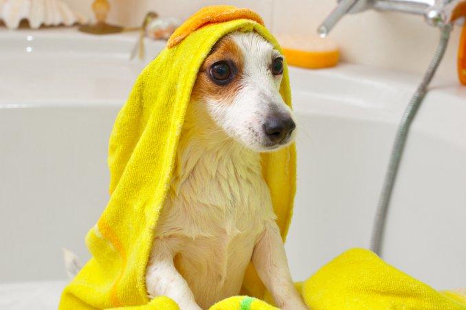 cane pulizia igiene lavaggio casa shampoo