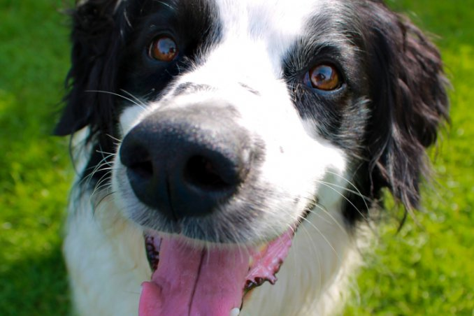 cane tartufo naso diagnosi malattia esami veterinario salute