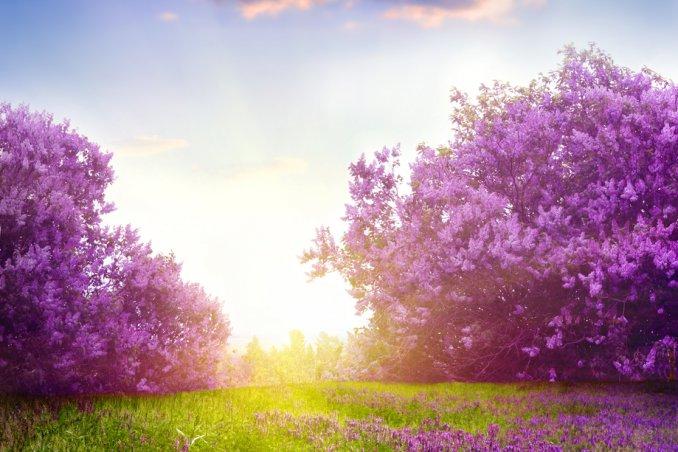 fiori, bella stagione, clima mite, sole primavera sogno