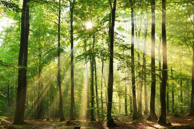 bosco, foresta, alberi, piante sogno