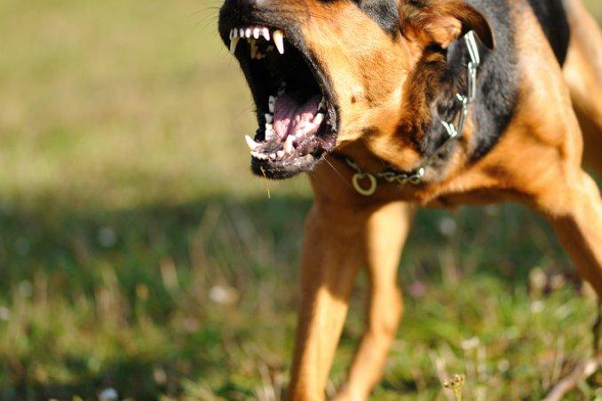 cane, cucciolo, barboncino, segugio, cane da caccia, cane da guardia, museruola, guinzaglio sogno