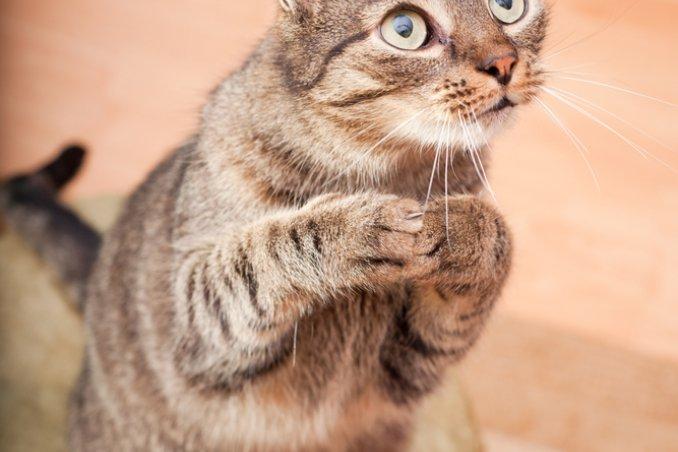 felino gatto sogno