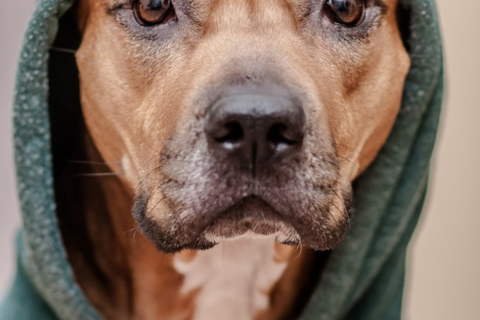 cani animali freddo difesa comportamenti suggerimenti consigli