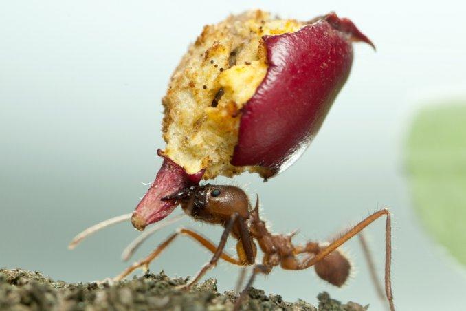 Come eliminare le formiche rimedi naturali e non donnad - Come debellare le formiche in casa ...