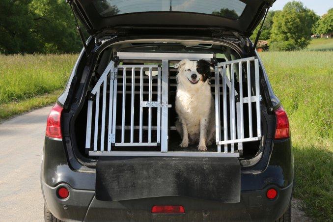 cane auto viaggio sicurezza rete divisoria legislazione
