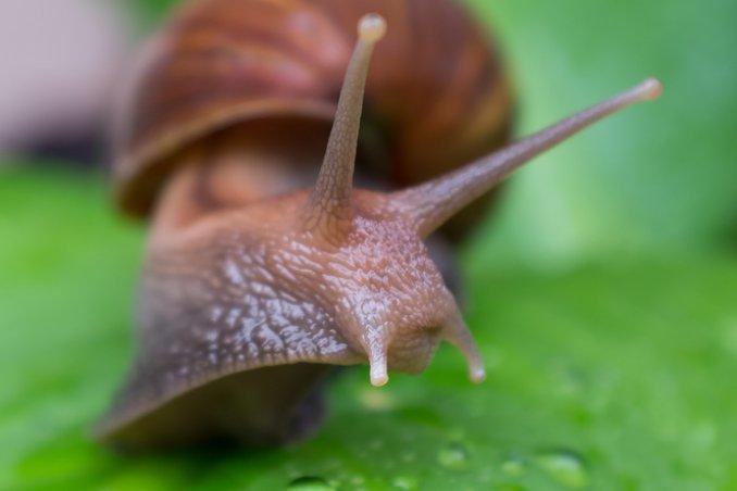 insetti lumache guide verdi prevenire curare piante