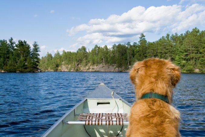 cane barca mare ordine igiene sicurezza vacanza corso vela
