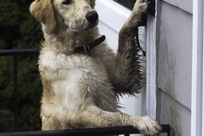 Insegna il bon ton al tuo cane