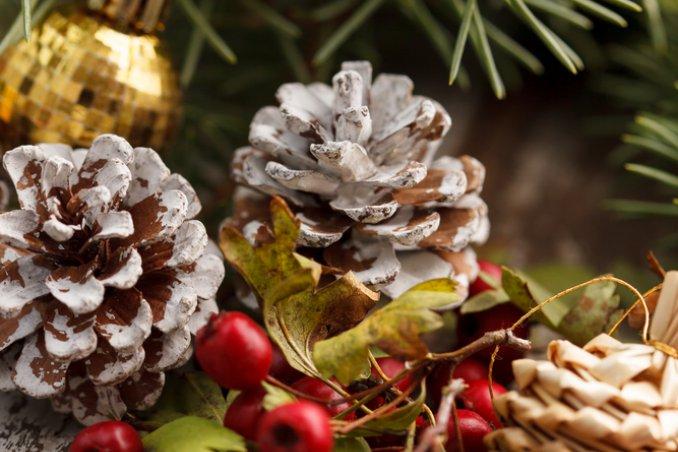La Leggenda Della Stella Di Natale Scuola Primaria.Le Piante Simbolo Del Natale Donnad