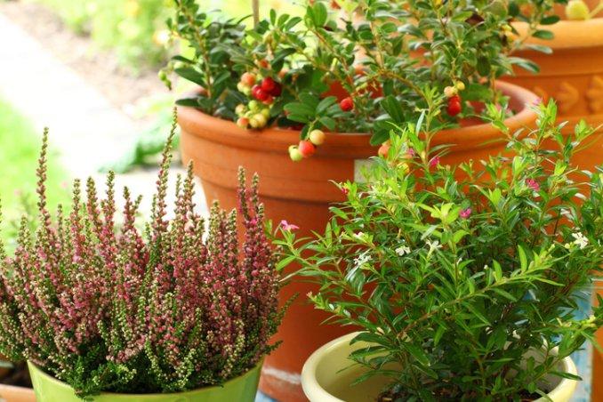 L\'orto d\'autunno sul tuo balcone | DonnaD