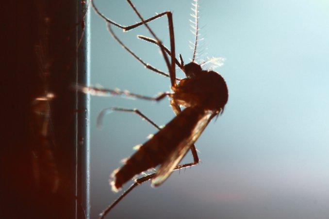 Piccoli insetti neri sui muri trendy tarlo del legno with - Eliminare formiche in casa ...