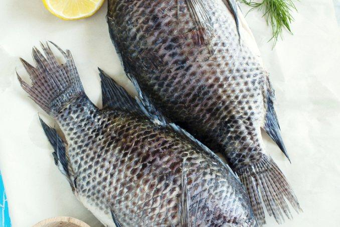 pesce consigli fresco allevato congelato suggerimenti