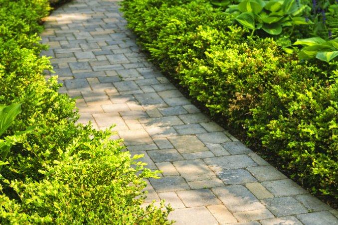 Siepi pareti verdi che decorano donnad - Siepi ornamentali da giardino ...