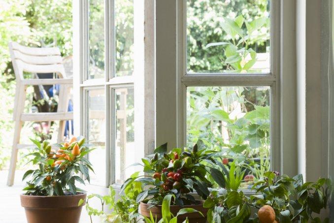 Una serra in casa donnad for Arredare il giardino con le piante