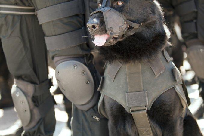 cane forze speciali