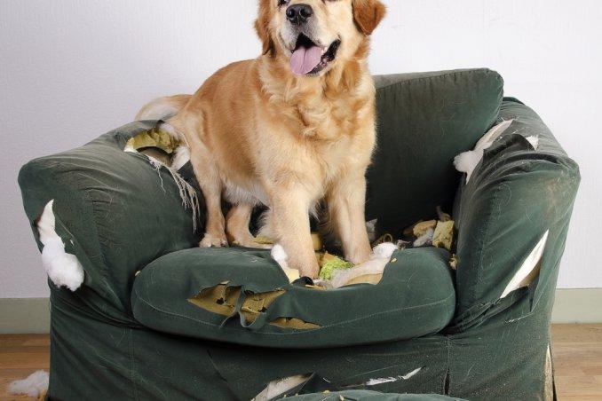 Il Mio Cane Distrugge Tutto Come Posso Fare Donnad