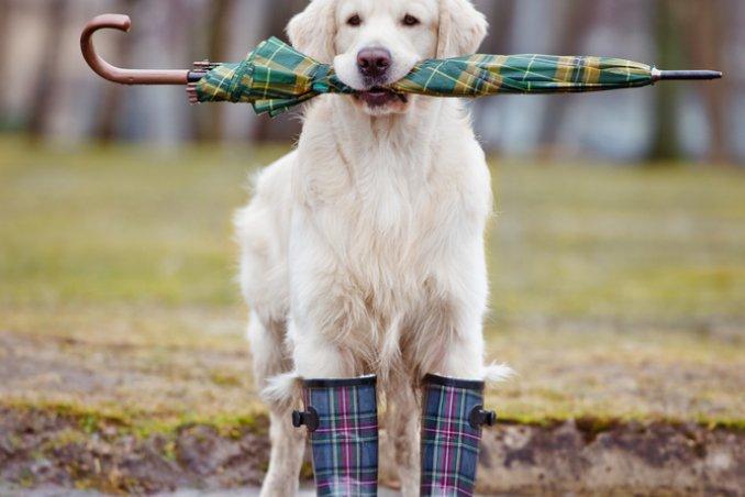 scarpe per cane