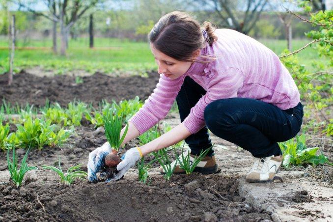 Le piante facili da coltivare