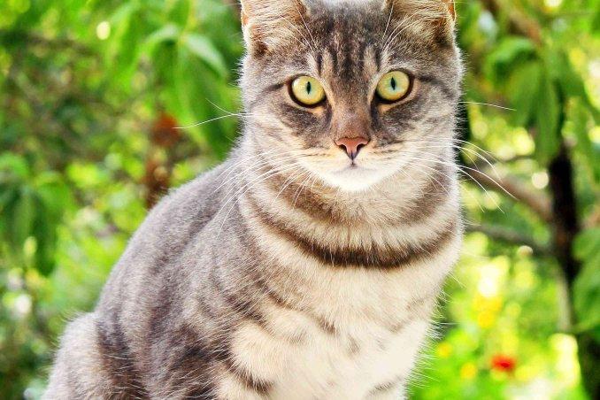 gatto soriano carattere